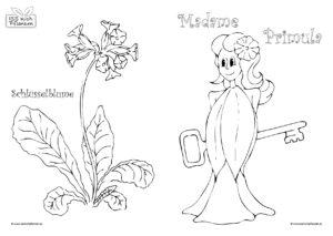 Malvorlage-Schluesselblume